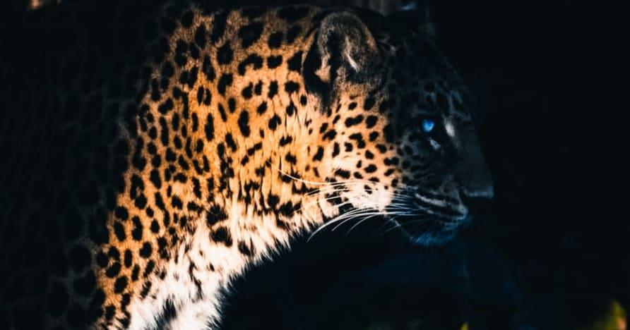 Yggdrasil 与 ReelPlay 合作,从 Bad Dingo 发布 Jaguar SuperWays